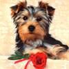 Аватар для Гена Матюшин