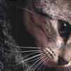 Аватар для Дмитрий Апросин